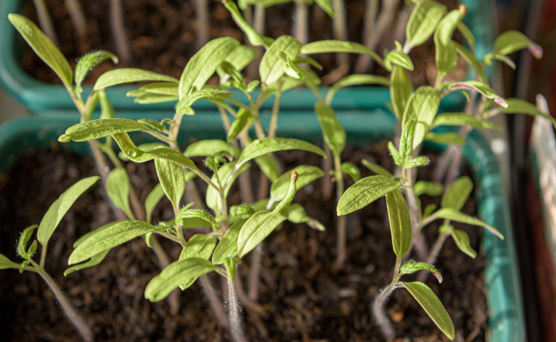 young-plants-4892082_1920